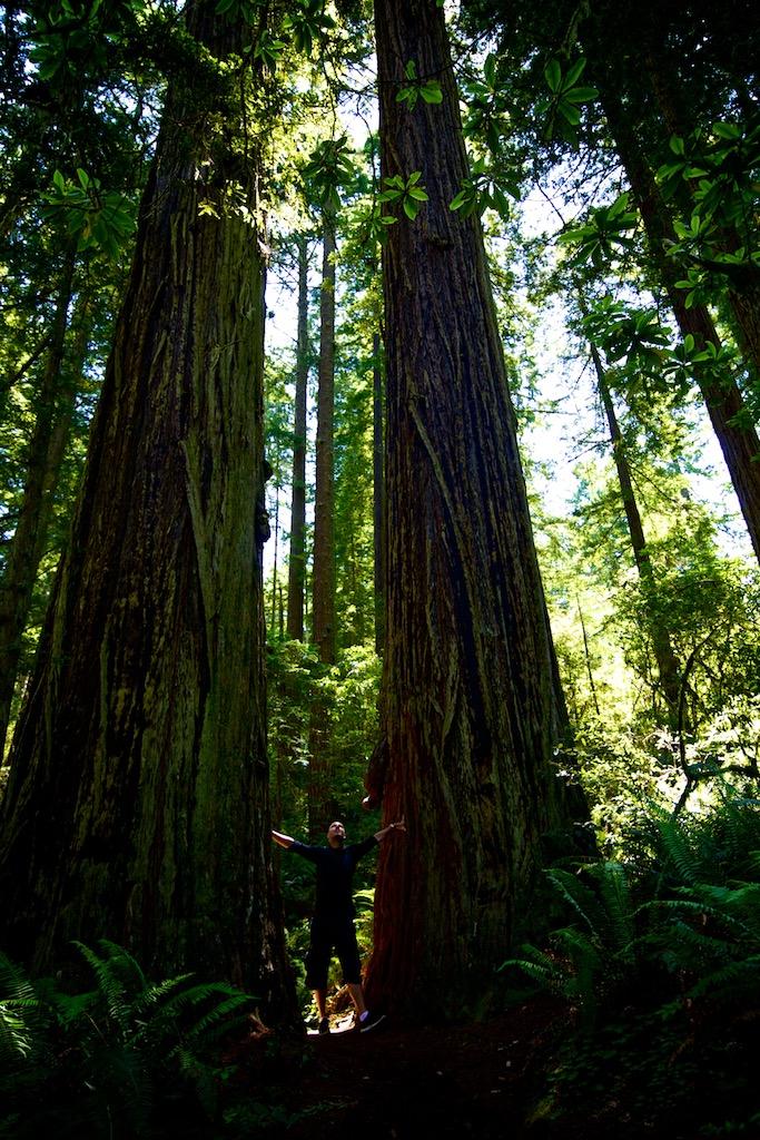 Redwood road trip 4