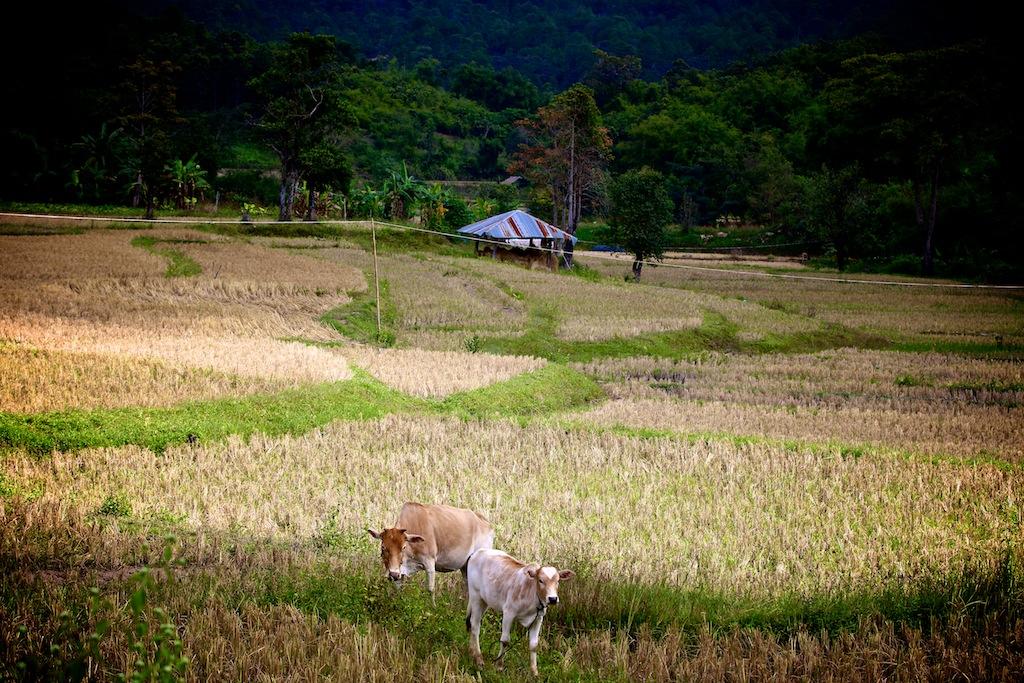 Road trip Thailand