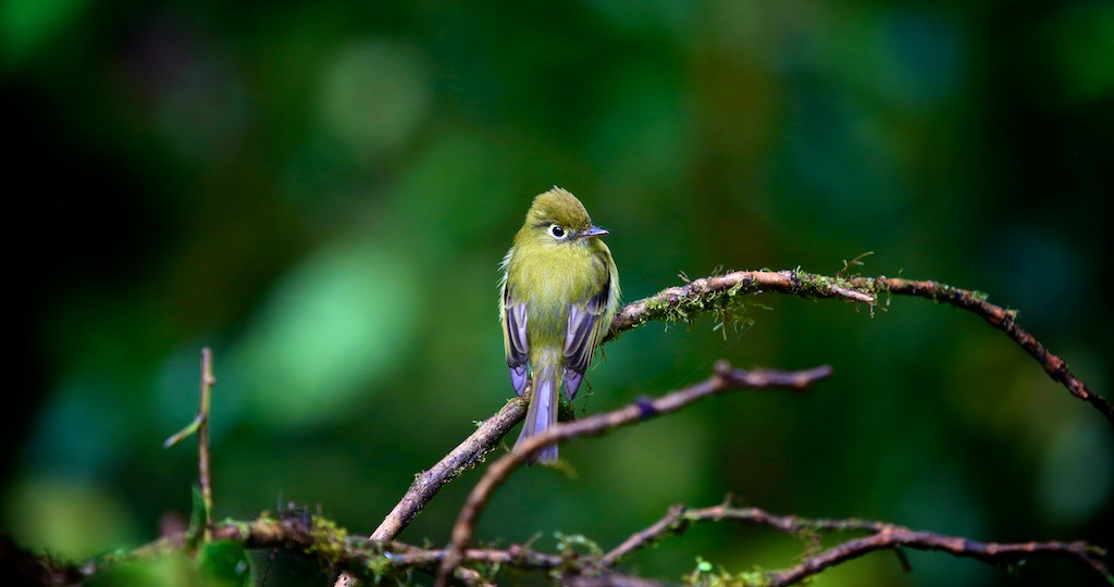 Fugleliv i Monteverde_Costa Rica