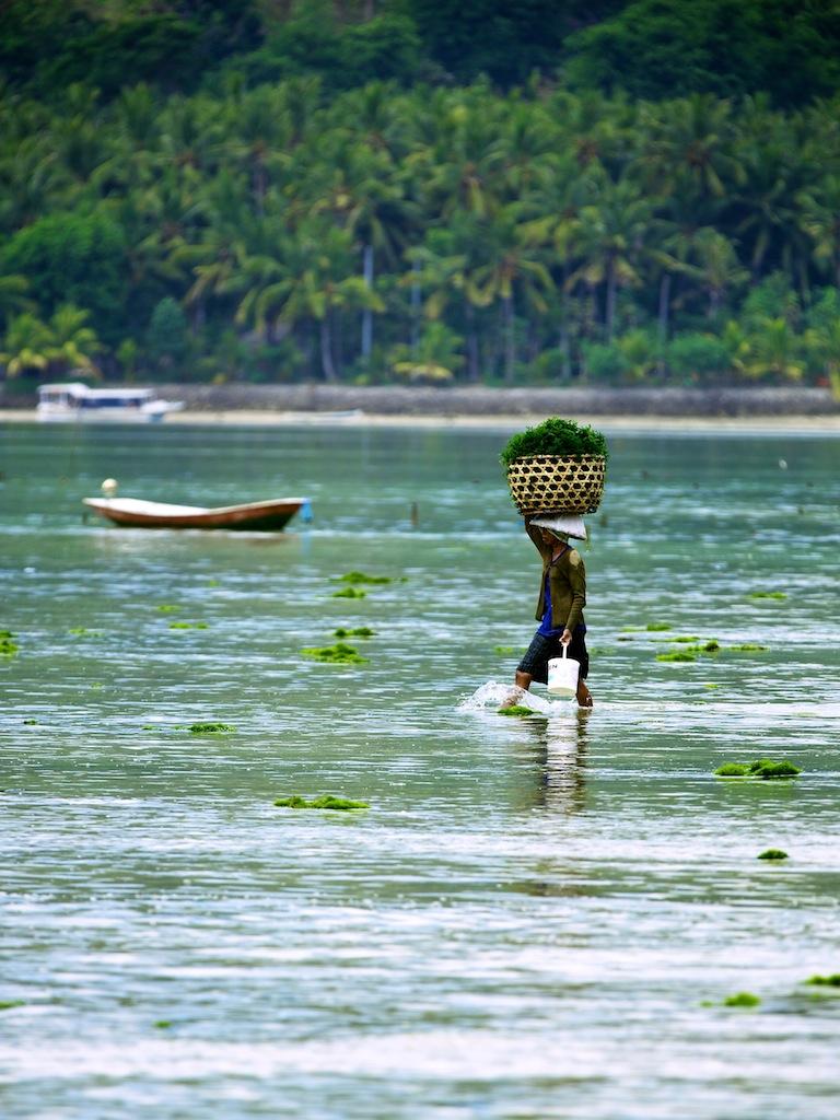 Rejse til Lembongan ved Bali