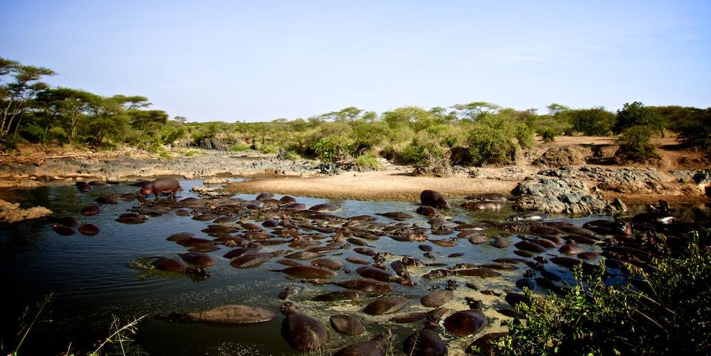 Safari i Tanzania 14