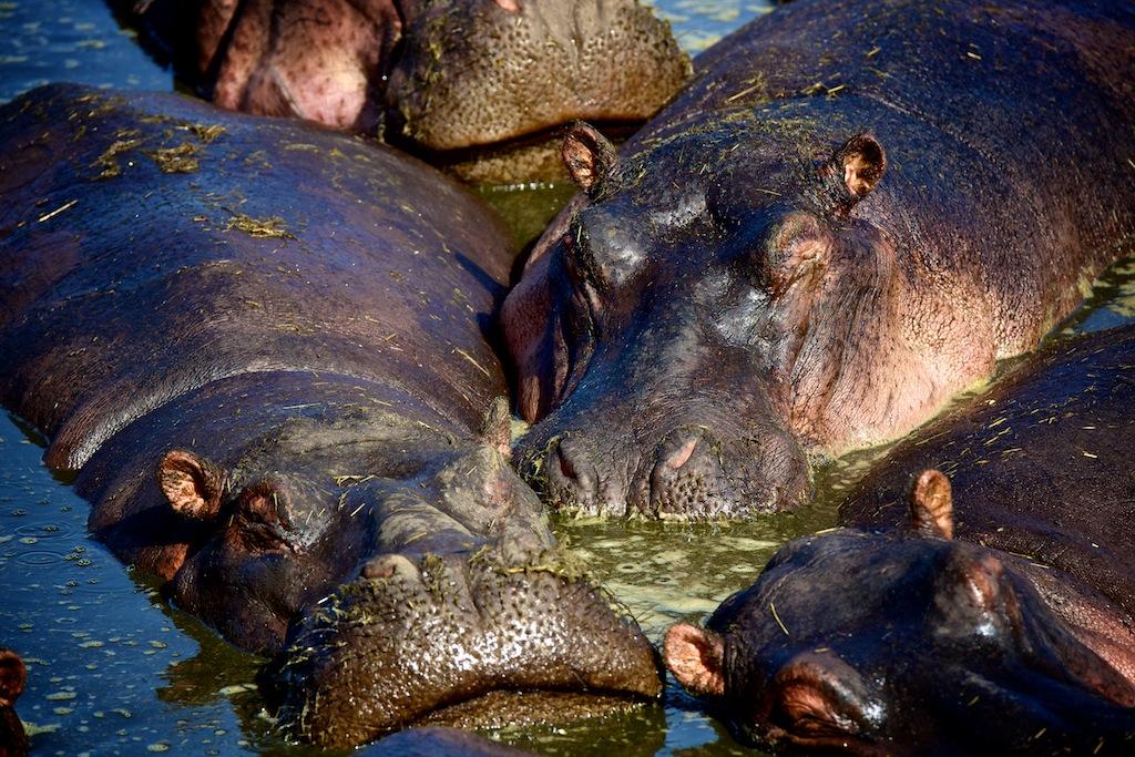 Safari i Tanzania 16