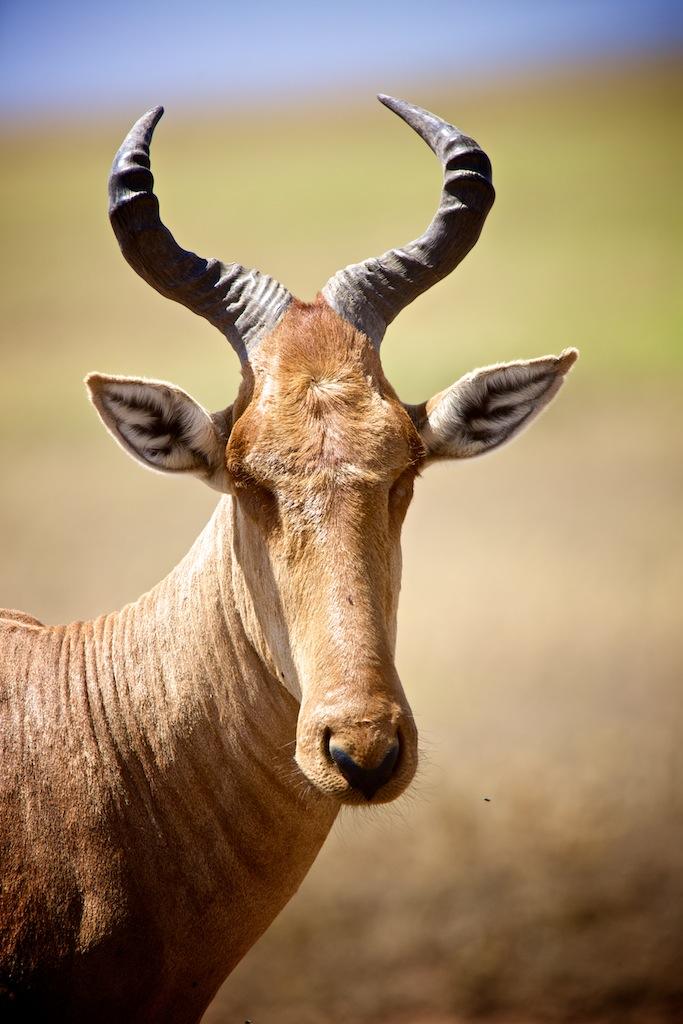 Safari i Tanzania 19