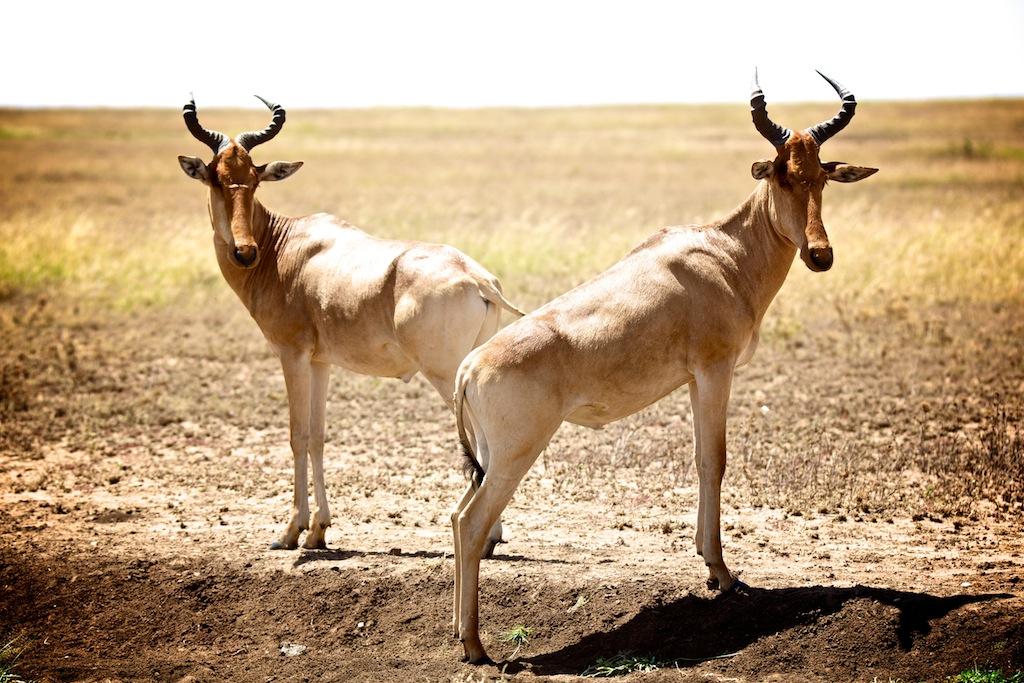 Safari i Tanzania 20