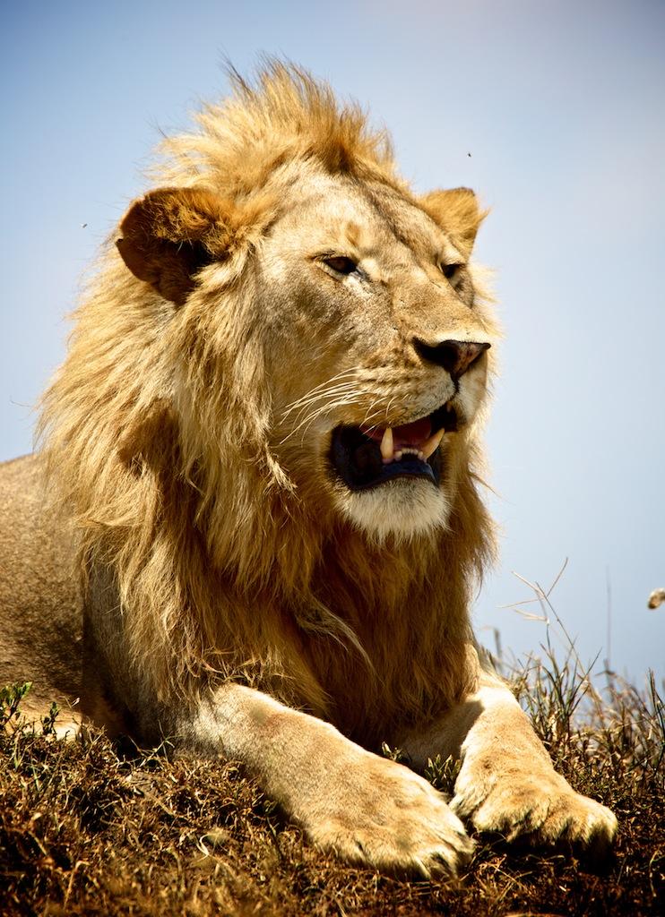 Safari i Tanzania 21