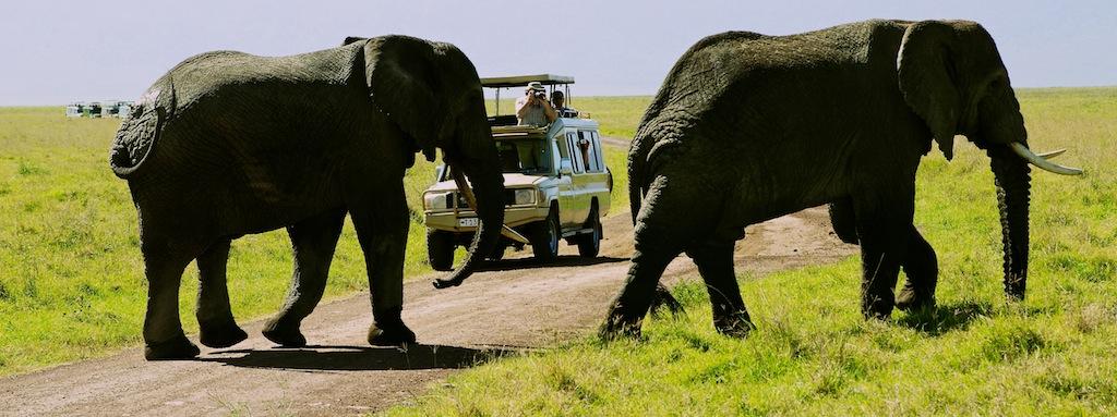 Safari i Tanzania