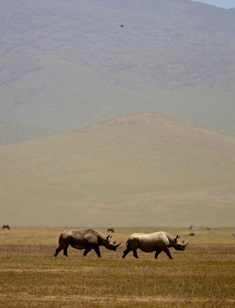 Safari i Tanzania 27