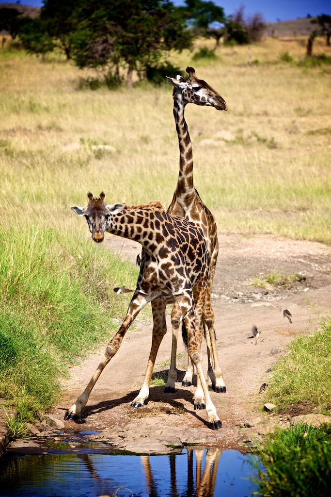 Safari i Tanzania 9