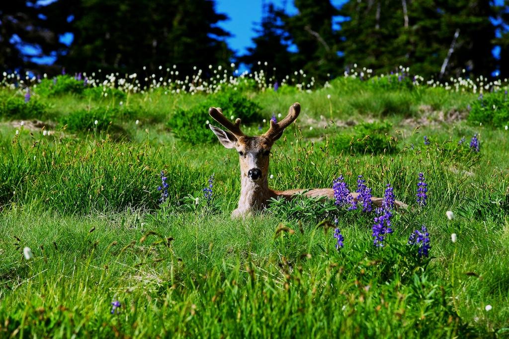 Bjerge i Washington USA 12