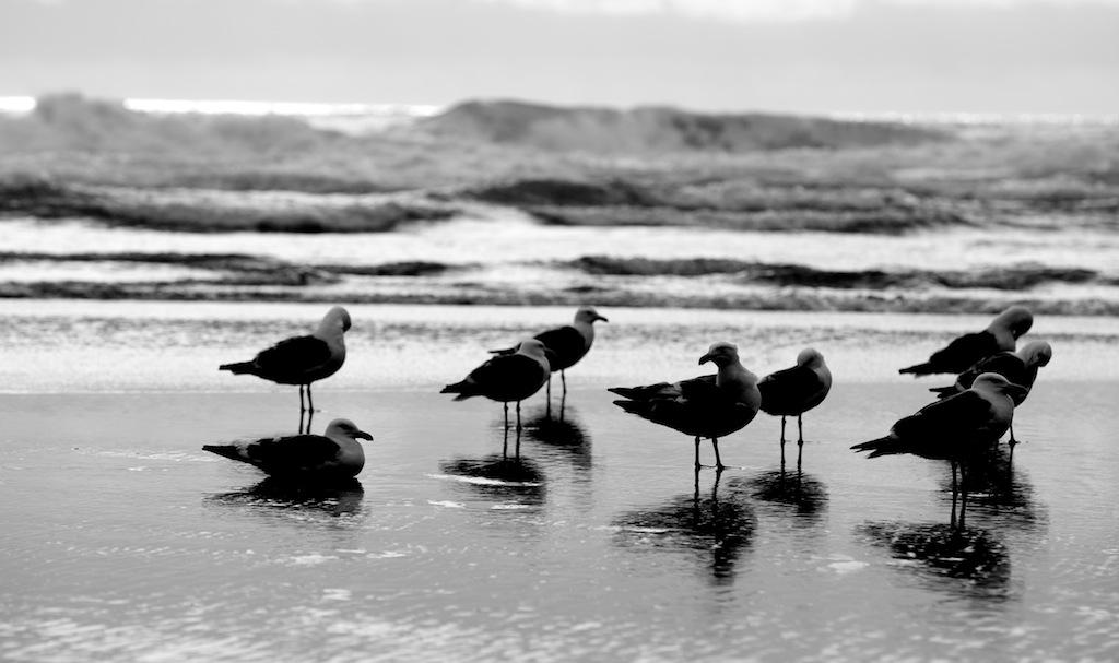 Cannon Beach 4