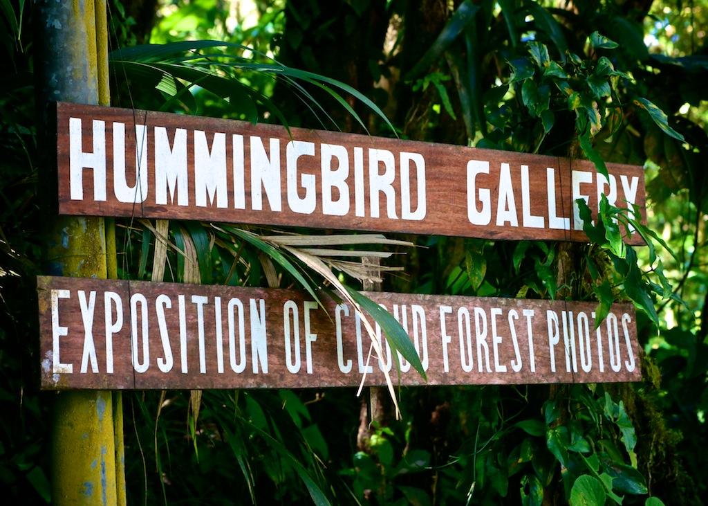 Kolibri i Monteverde_Costa Rica