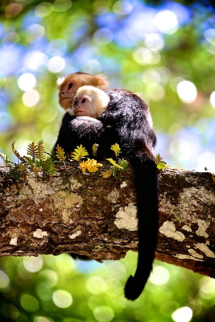Manuel Antonio i Costa Rica 21