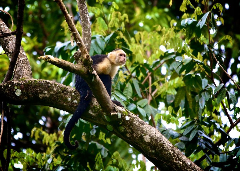 Manuel Antonio i Costa Rica 5