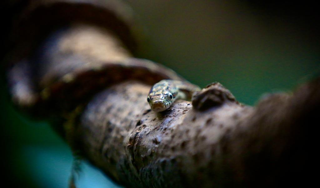 Monteverde i Costa Rica 10