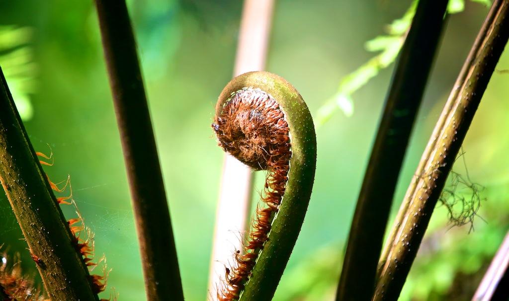 Monteverde i Costa Rica 11