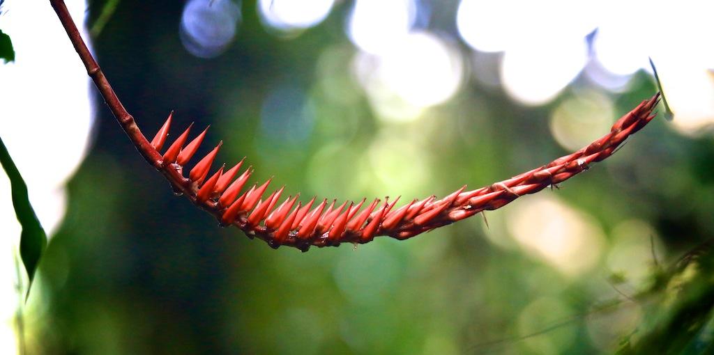 Monteverde i Costa Rica 12