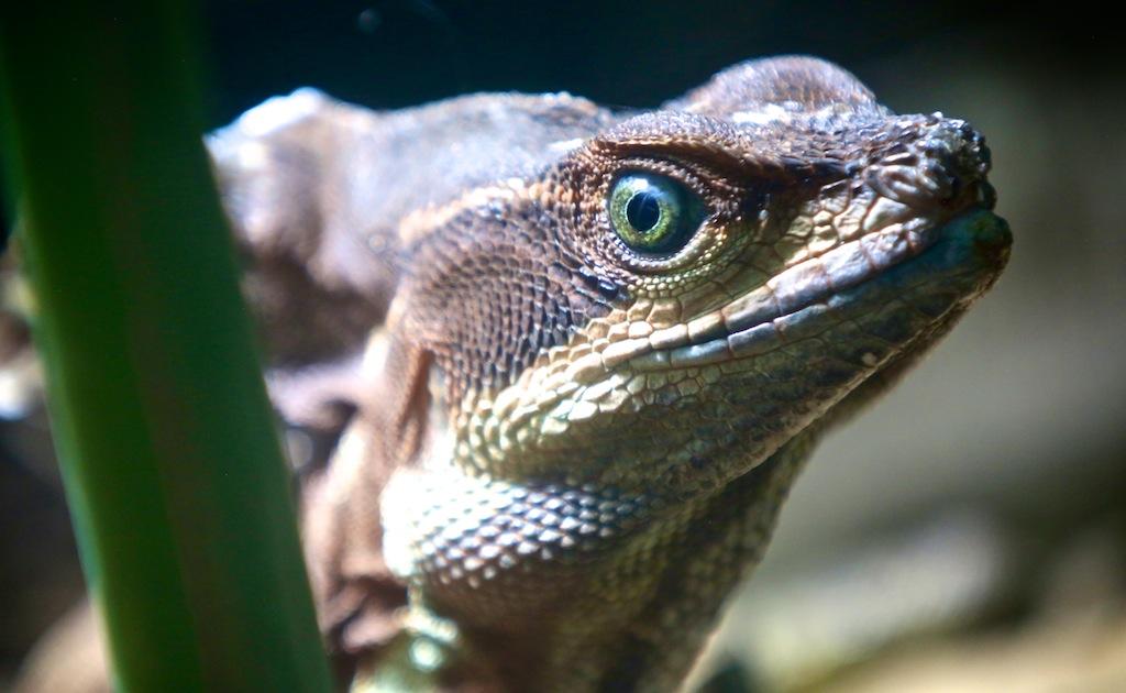 Monteverde i Costa Rica 13