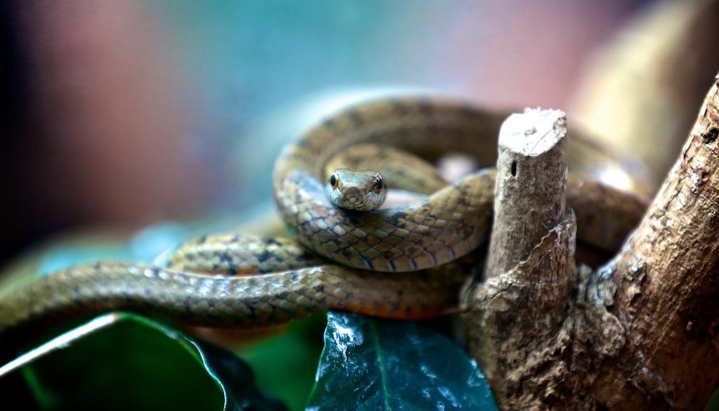 Monteverde i Costa Rica 14
