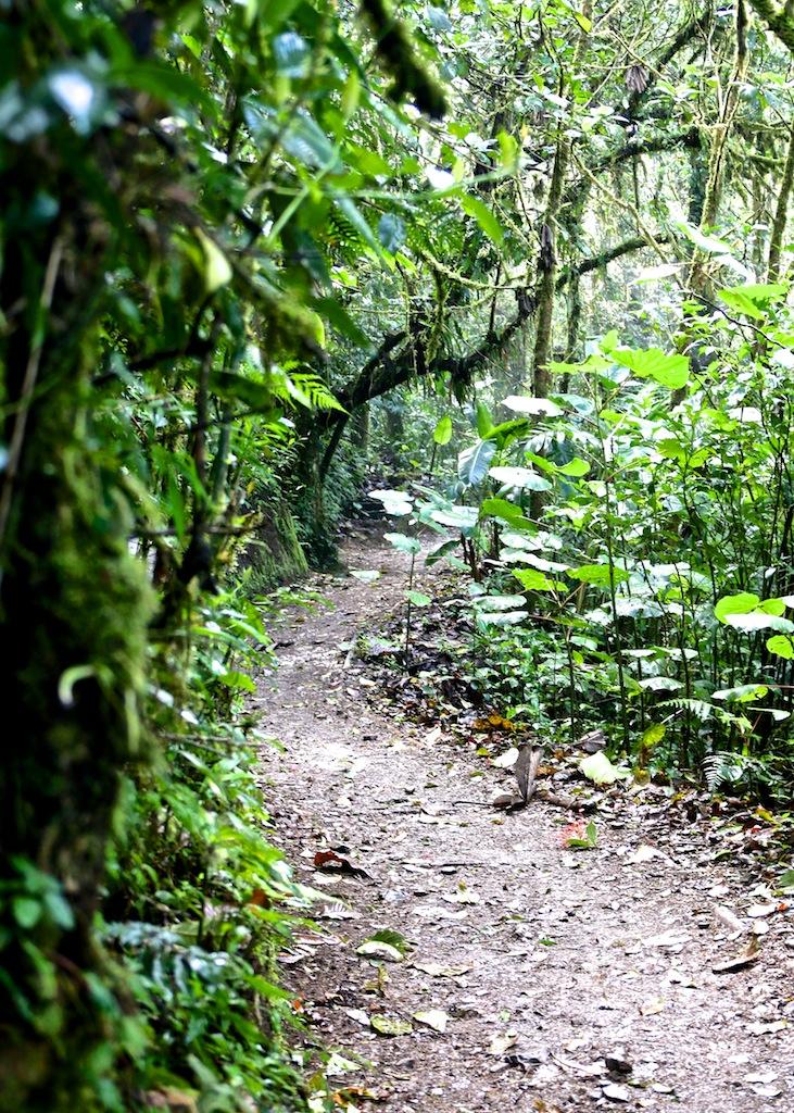 Monteverde i Costa Rica 2