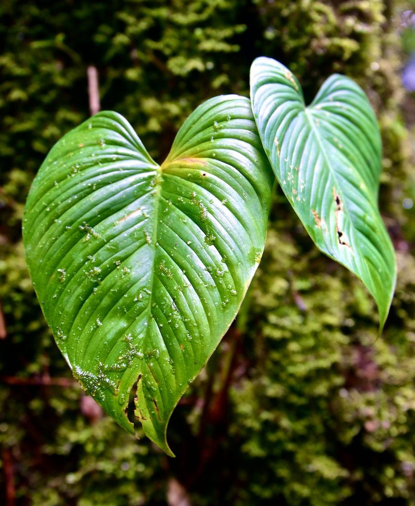 Monteverde i Costa Rica 4