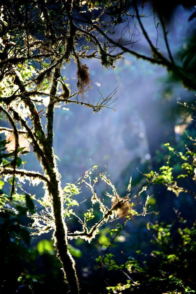 Monteverde i Costa Rica 7