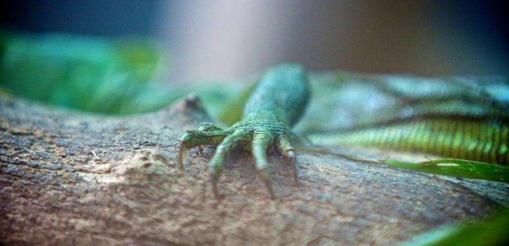 Monteverde i Costa Rica 9