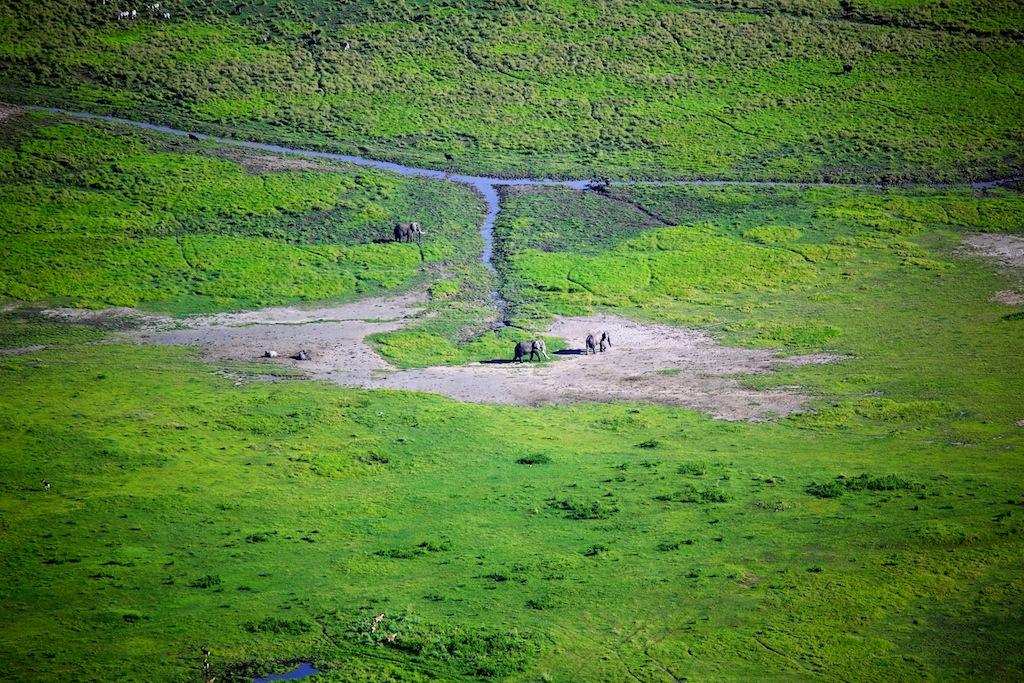 Ngorongoro 5