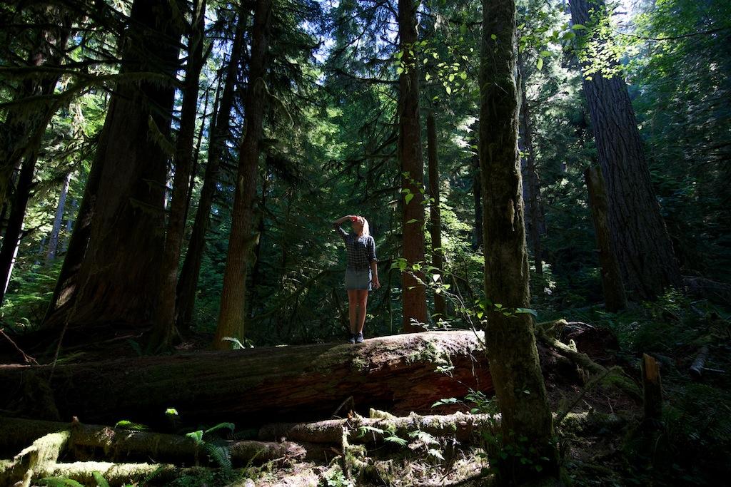 Rainforest Washington USA