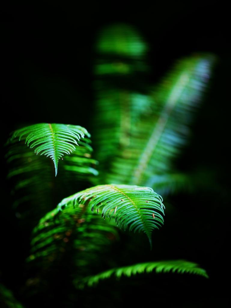 Regnskov i Washington USA 2
