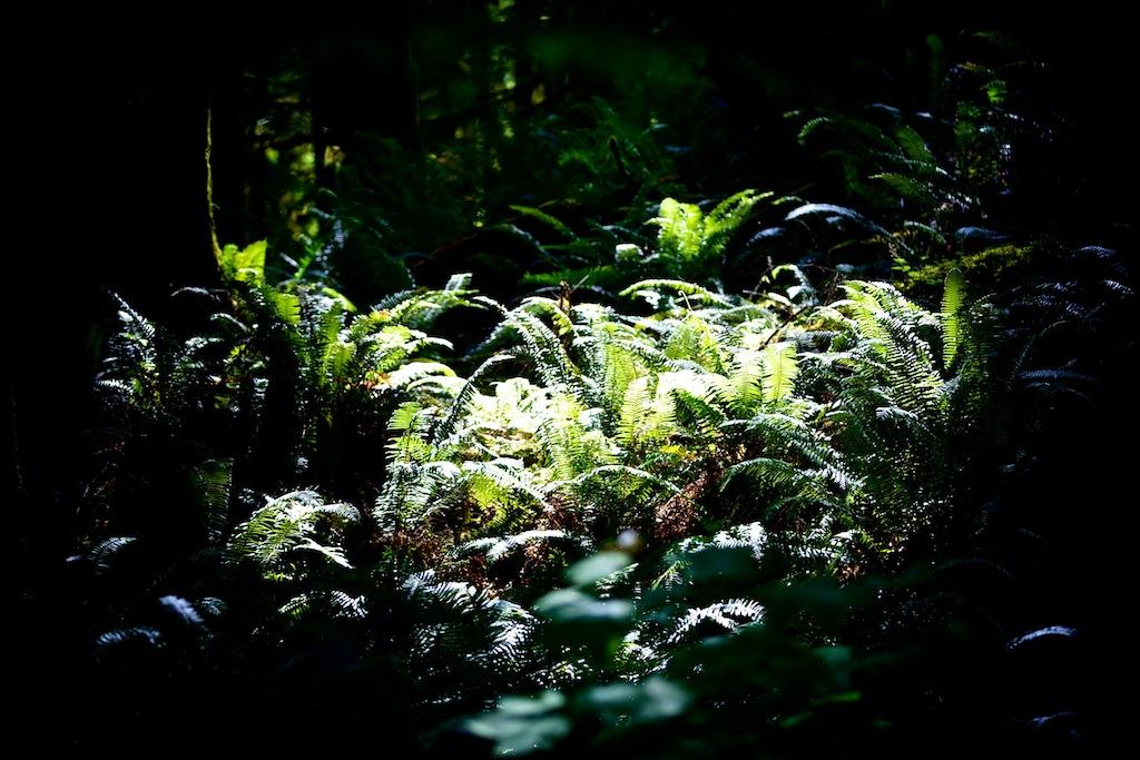 Regnskov i Washington USA 6