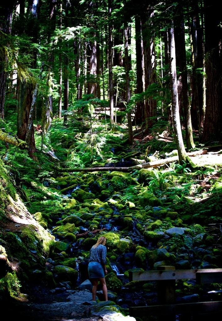 Regnskov i Washington USA 9