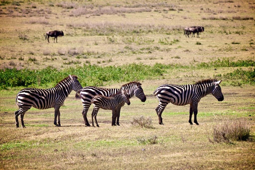 Safari i masai land 10