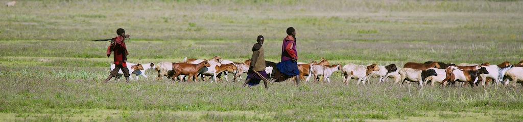 Safari i masai land 5