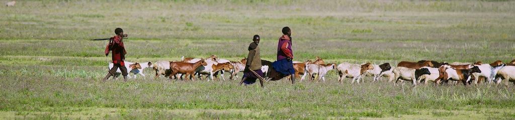 Safari i masai land 5