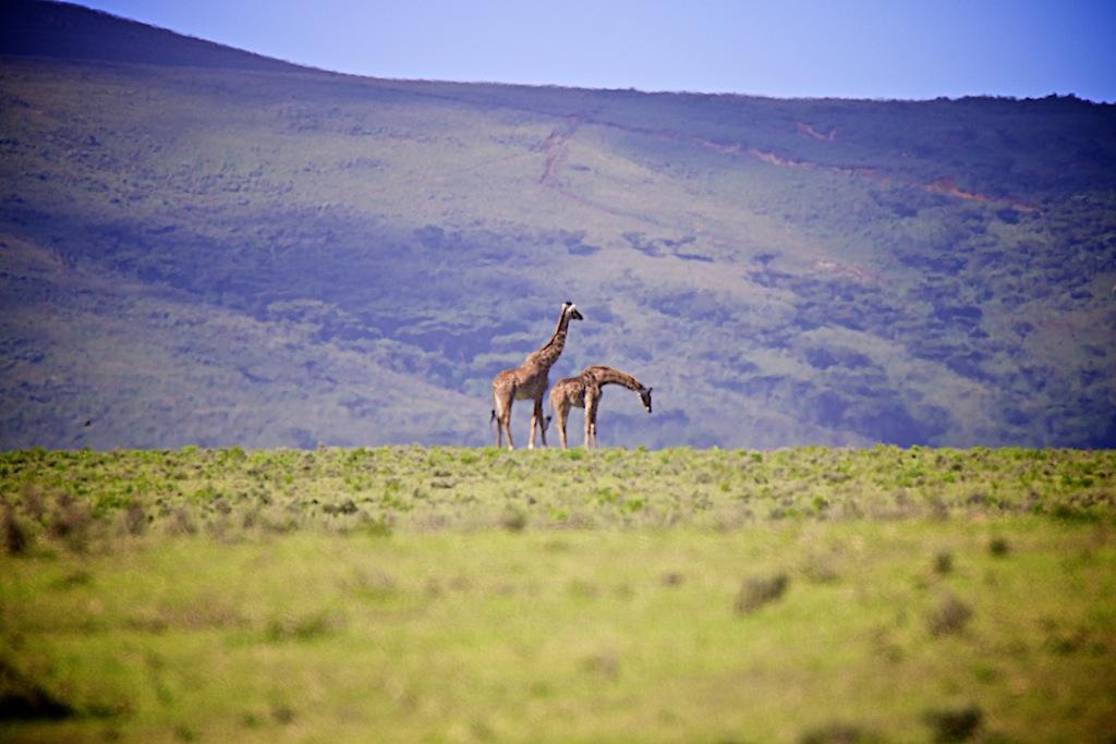 Safari i masai land 9