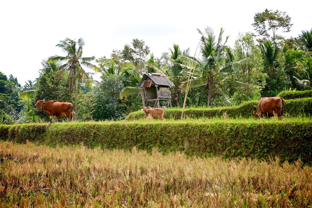 Ubud_Bali 5