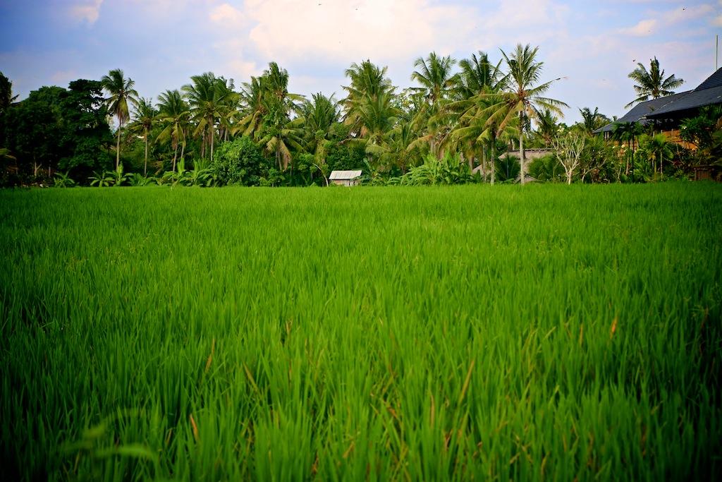 Ubud_Bali 7
