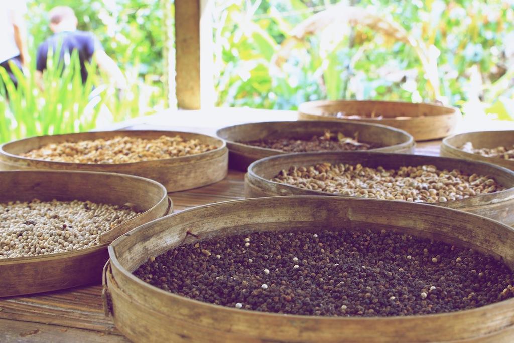 Verdens dyreste kaffe på Bali 5