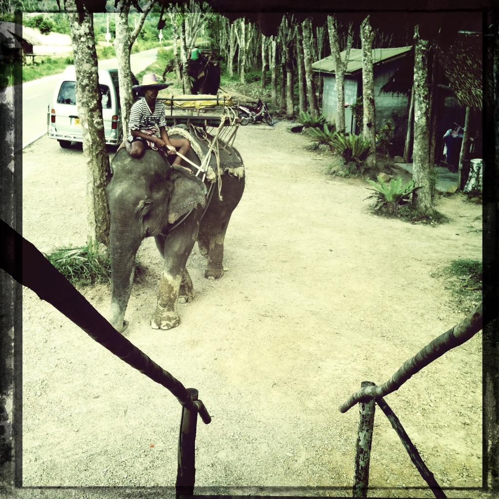 Elefanter i Thailand 2