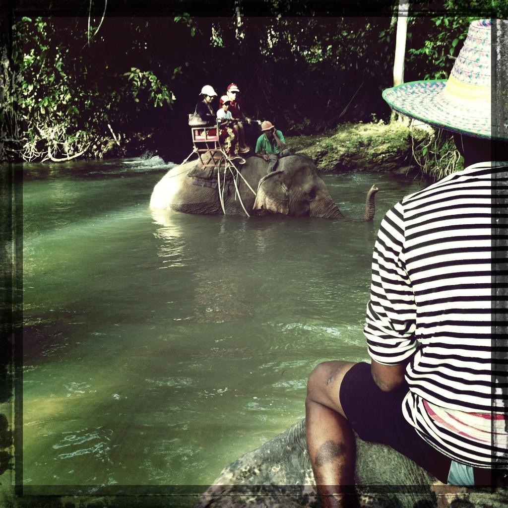Elefanter i Thailand 4