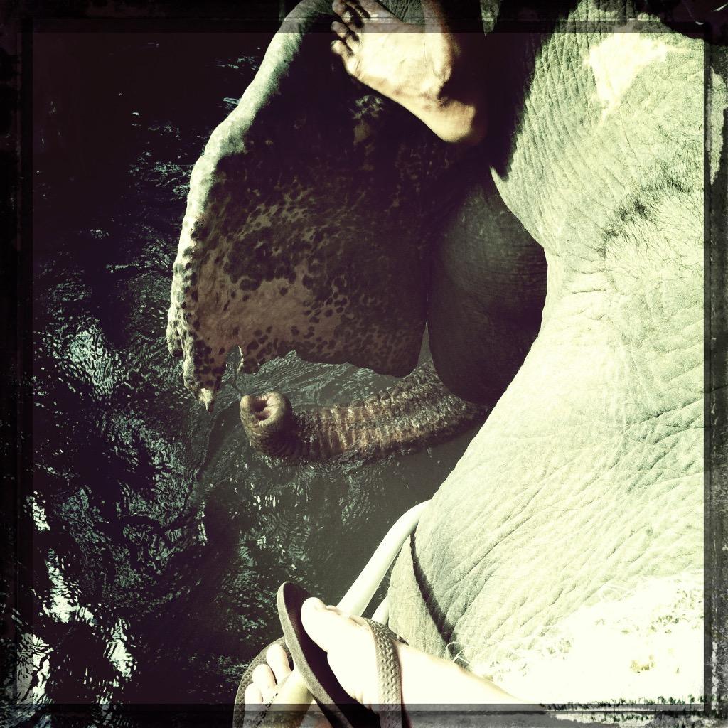 Elefanter i Thailand 5