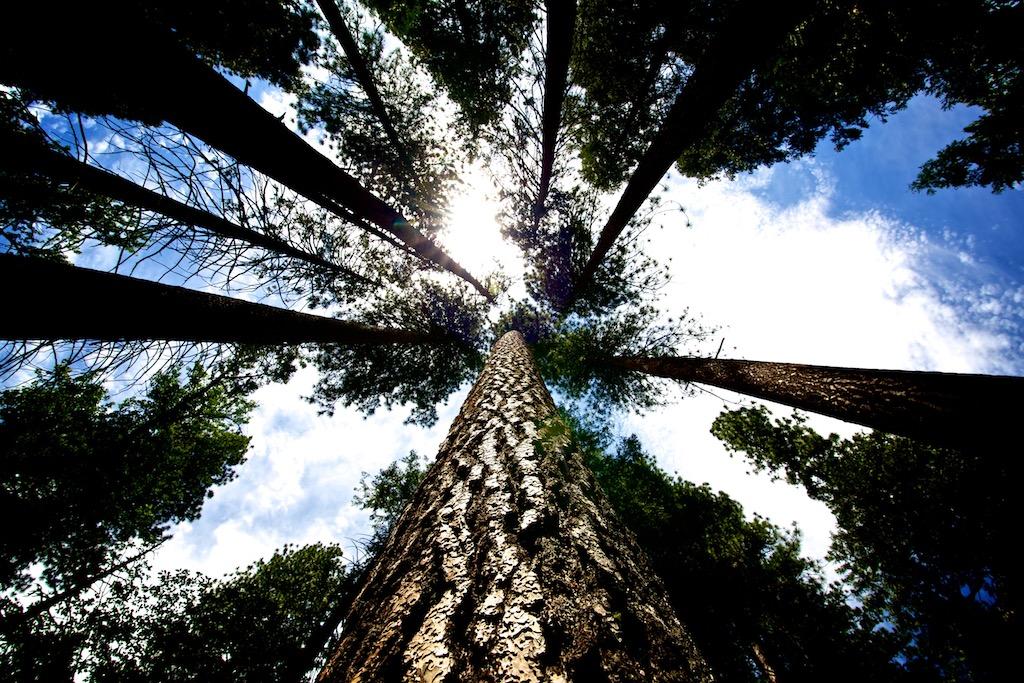 Yosemite Nationalpark 6