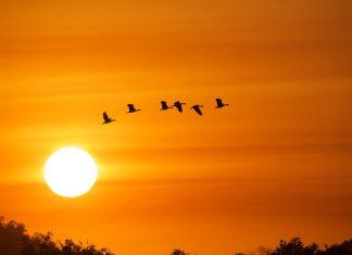 Safari efter solnedgang i Sydafrika
