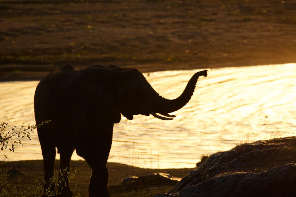 Elefant i Sydafrika_Kruger Nationalpark