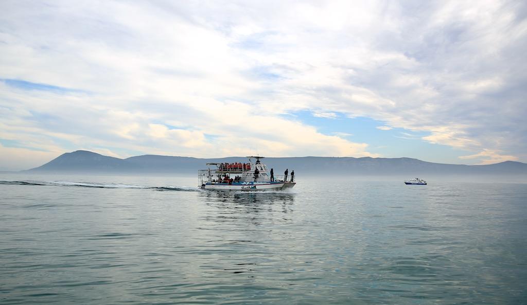 Båd til dykning med hvidhajer