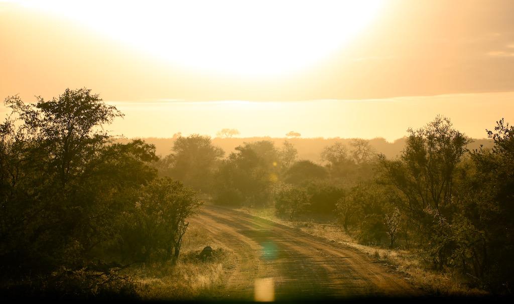 Kruger Nationalpark i Sydafrika