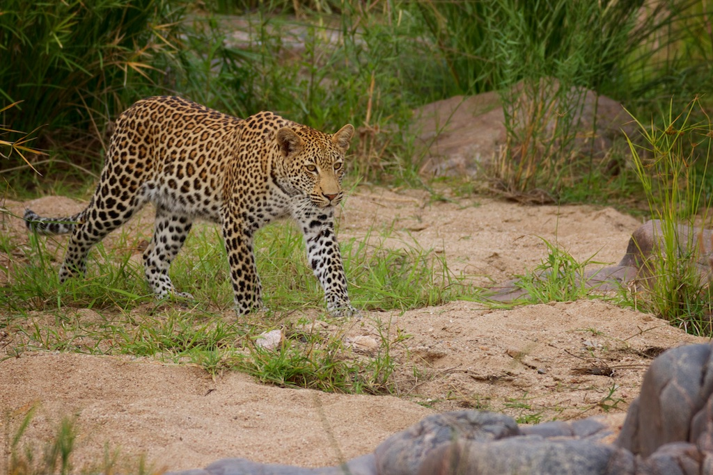 Safari South Africa