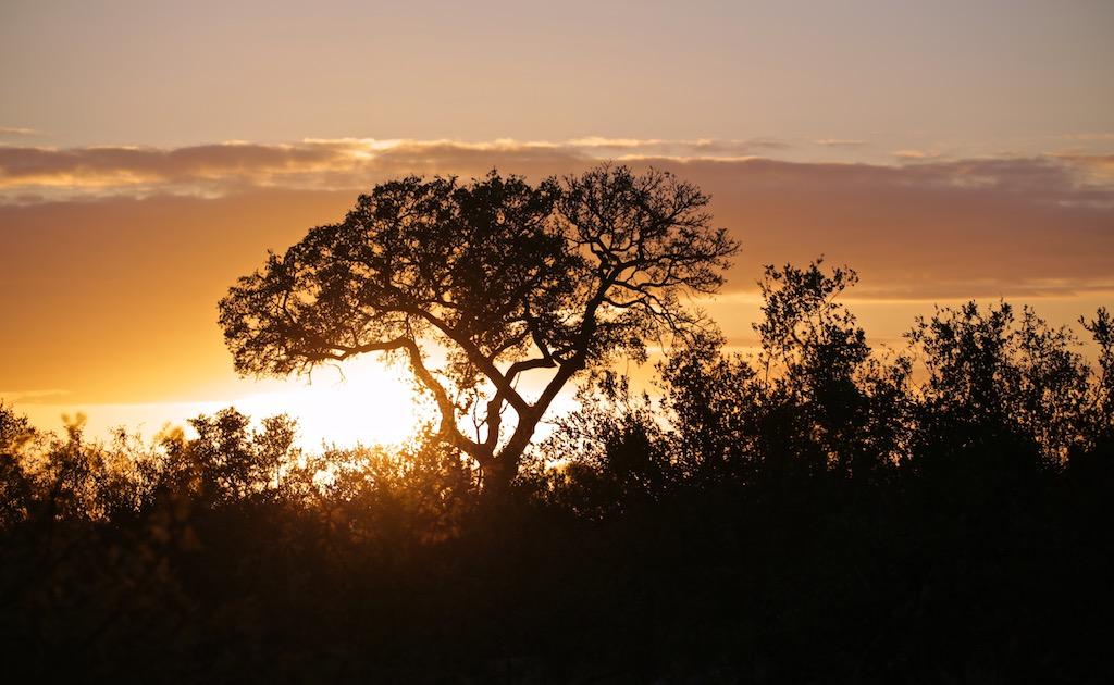 Solopgang Kruger Nationalpark i Sydafrika