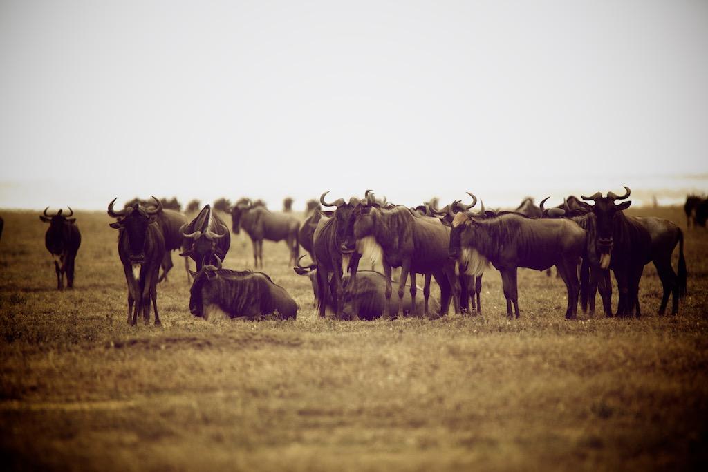 Safari guide Tanzania