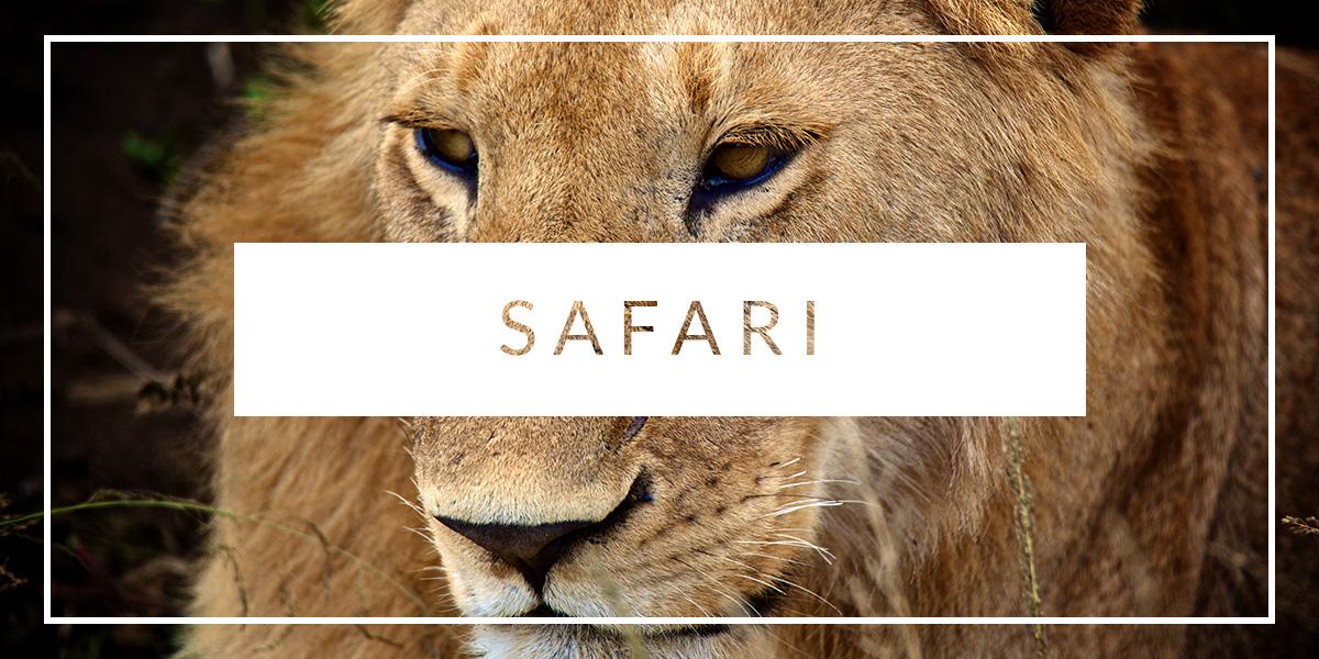 Safari-rejser